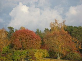 Höstskog